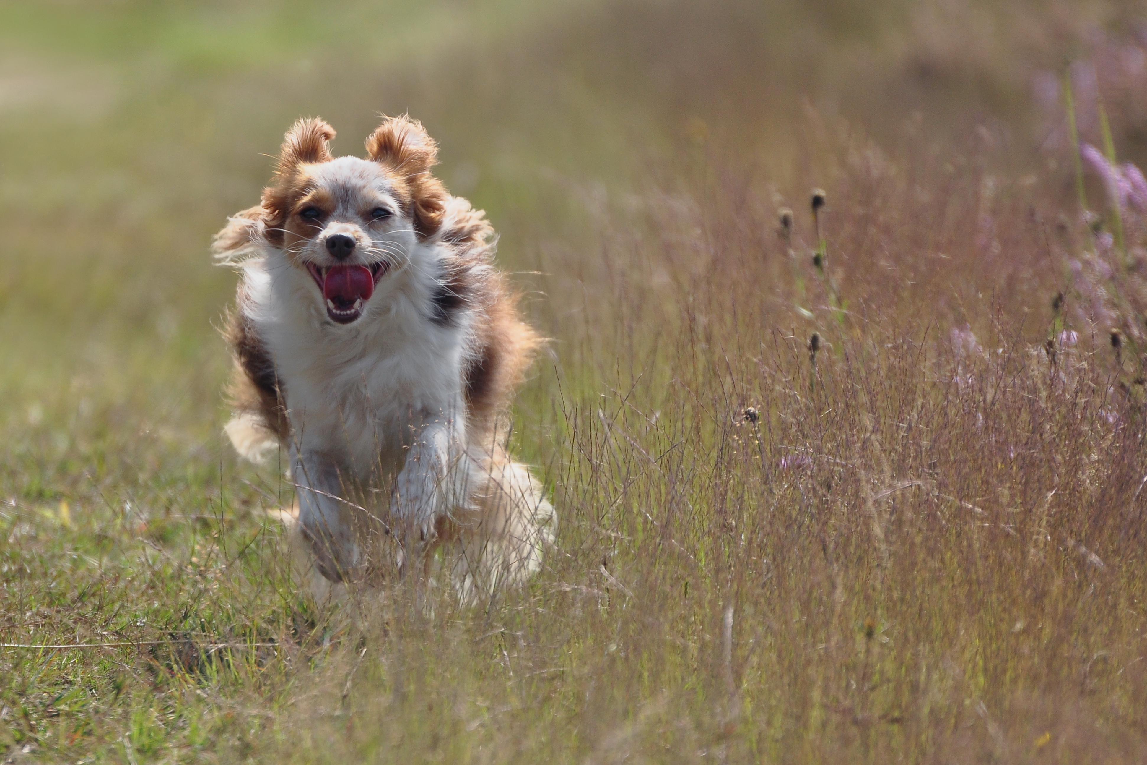 Scuola Cinofila Biella | Cento per Cento Dog di Alessandra Vacchiero