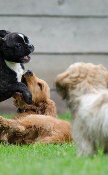 Corso per cuccioli